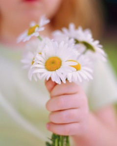 Holding Daisies