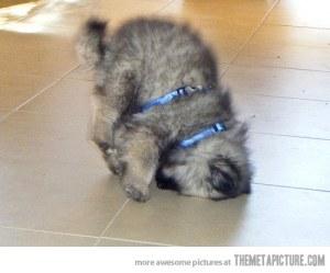 funny-puppy-upside-down-cute