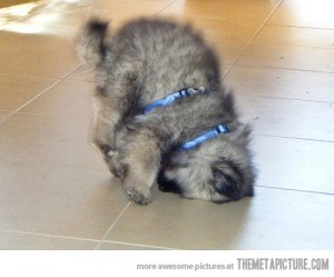 funny-puppy-upside-down-cute