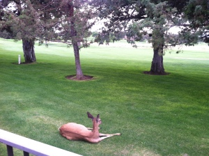 deer in front of deck