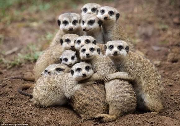 hug-friend-day-38-cute--large-msg-136699835332