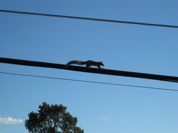 squirrel on wire