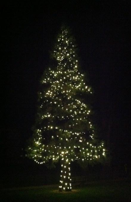 Christmas tree Michael took