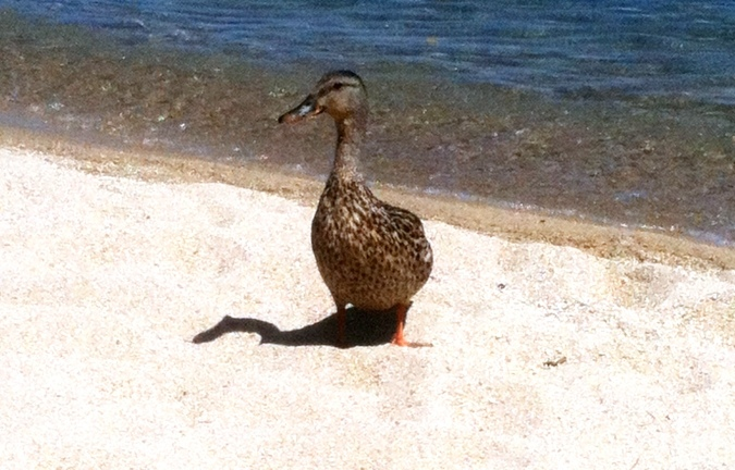 our beach buddy