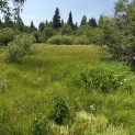 Taylor Creek meadow