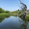 Taylor Creek