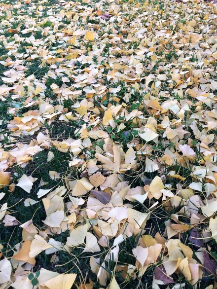 Golden leaves (2)